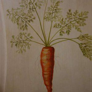 Le légume comme représentation naturaliste